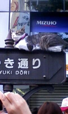銀座の名物ネコ?!